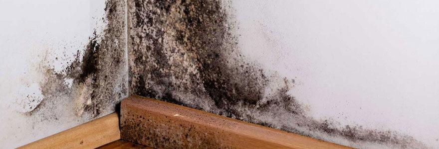 Problèmes d'humidité sur les murs